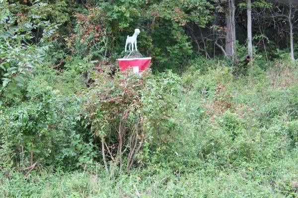 A statue of Fred the goat on the hill in one of his favorite spots.