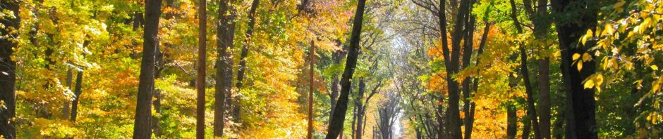 Fall is a wonderful time to visit the Indiana Dunes.